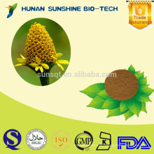 Plant extract spilanthol / 10:1 Acmella oleracea Extract Powder