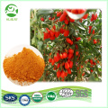 High Quality Organic Goji Berry Powder wolfberry extract