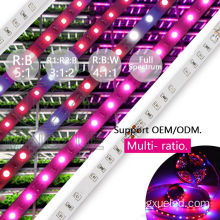 ขายร้อน SMD5050 LED Grow Strip Light