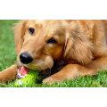 Natürliche Hundefutter Dental Dog leicht zu Digest