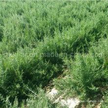 Medlar USDA Nof Organic Dried Black Goji