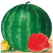 HW09 Daceng grande rodada ferrugem verde F1 híbrido sementes de melancia sem sementes para o plantio