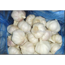 2011 fresh white garlic