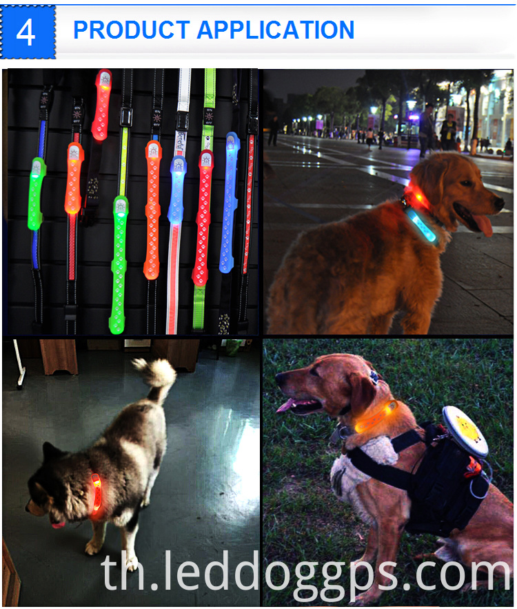 Dog Night Walking Lights
