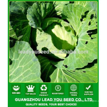 NC391 Turan Guangzhou flat cabbage seeds for sale