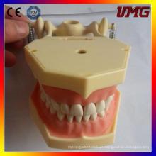 Dentes e modelos dentários para médicos