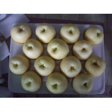 Fresh Golden Pear/Chinese Fruits of Good Quality (30/36/42#)