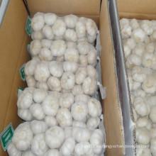 Proveedor de ajo blanco puro en China con el precio más bajo