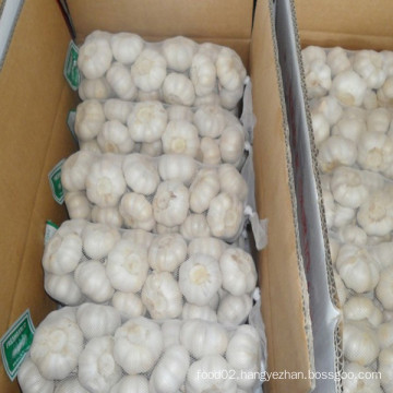 Pure White Garlic Supplier in China with Lowest Price