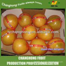 Chinesischer Pampelmuse / ausgezeichnete Grapefruit