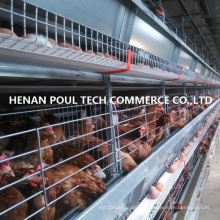 Layer Battery Cage (H type)
