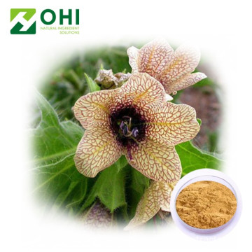 Chiết xuất Henbane Scopolamine Hydrobromide Trihydrate
