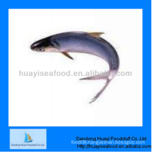 frozen fish best quality frozen anchovy