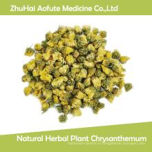Натуральные травяные растения хризантемы
