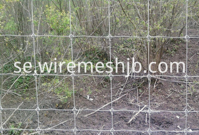 Galvanized Field Wire Fence