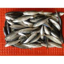 W / R Gefrorene Pferd Makrelen Fisch