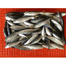 W/R Frozen Horse Mackerel Fish