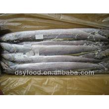 frozen ribbonfish fish