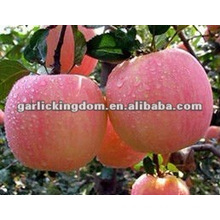New Crop Grade A chinese fresh red fuji apple