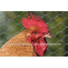 Malha de fio de frango com menor preço