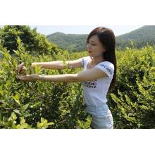 Individual Quick Freezin-IQF Organic Blackberry Zl-009