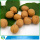 Wholesale Raw Walnuts In Shell Price