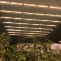 2.9 umol/J Commercial Waterproof Led Grow Light Bars