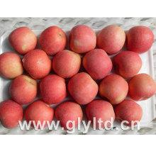 Gute Qualität Rot Frisch FUJI Apfel