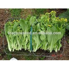 Precios de las semillas vegetales al por mayor de NPK21 Nandao, pak choi semillas guangdong