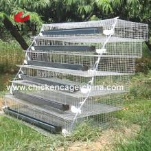 Batterie-Wachtelkäfige für Eierschicht Wachtel und Broiler Wachtel