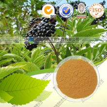 Elderberry Extract 10: 1 Anthocyanins