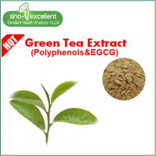 Yeşil çay özü Catechin