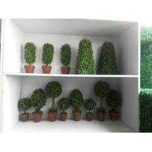 Precio de fábrica de Yiwu Artificial Topiary Animal Muchos Stlyes diferentes al por mayor a buen precio