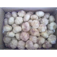 5.5cm Fresh Pure White Garlic