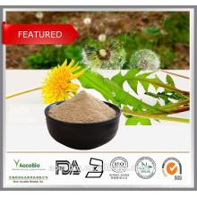 Mejor precio Extracto de raíz de diente de león, extracto puro de diente de león en polvo, Flavonoides 5%