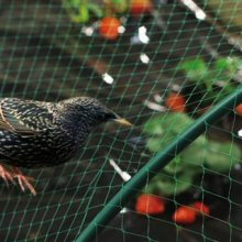 Knotted Anti Bird Netting
