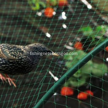 Knotted Anti Bird Netting