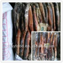 China Tintenfisch Fabrik / Angebot Eine Klasse illex Tintenfisch