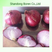 Cebolla roja fresca a la venta Precio de mercado de la cebolla roja