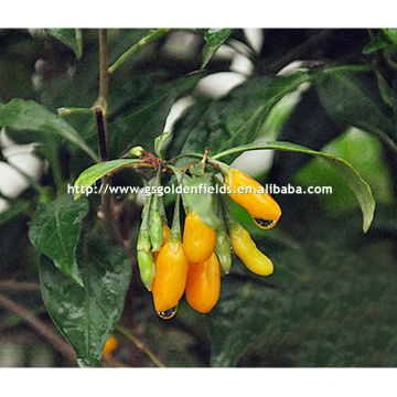 yellow Wolfberry Seedlings With Strong Root System from china