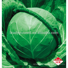AC021 Erji early maturity f1 hybrid cabbage seed different types of seeds
