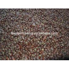 Fornecedor de castanha chinesa