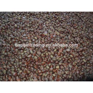 Chinese chestnut supplier