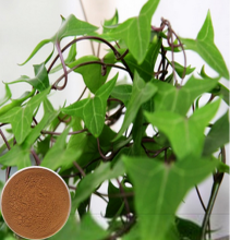 Ivy P.E / Caulis Hederae Sinensis extract / Hvederahelix extract of Hederacoside C
