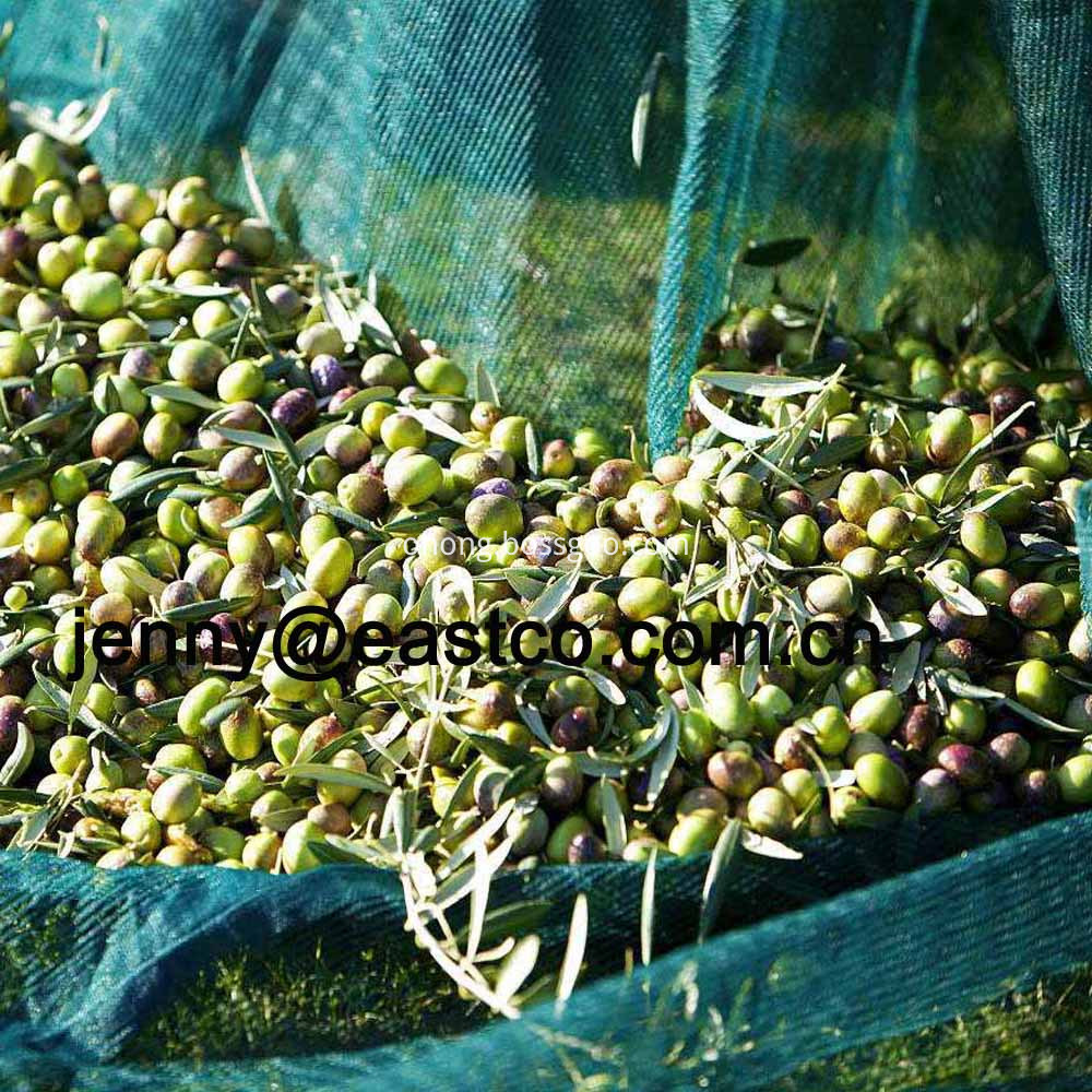 Olive Netting