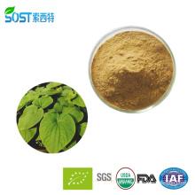 High Quality 10:1 Kava Kava Extract Powder