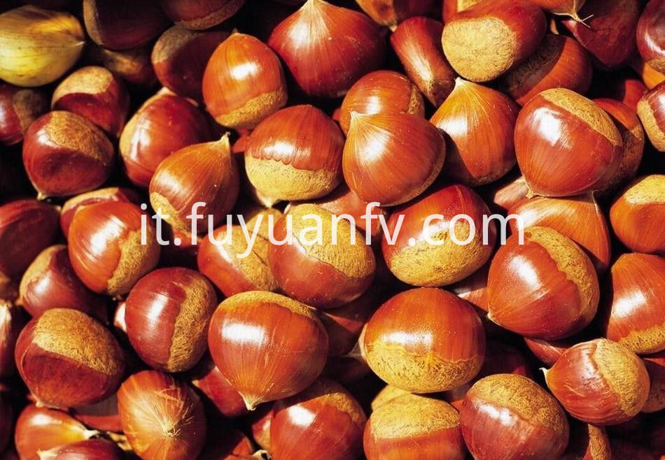 Fresh Chestnut 11