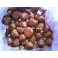 40-50 chestnuts 5kg gunny bag fresh chestnuts for Jordan
