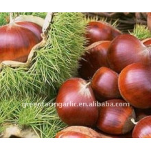 Super Quality Chestnuts In China
