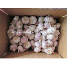 High Quality &Best Price Fresh Garlic